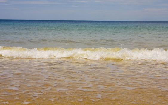 Conchas mostram como oceano reagiu ao aquecimento do planeta