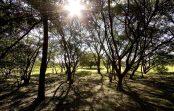 Professora de Gestão Ambiental participa de relatório global sobre biodiversidade