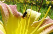 Rádio USP: Morte de meio bilhão de abelhas é consequência de agrotóxicos