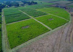 Professor da EACH conduz experimentos em larga escala para investigar os impactos da intensificação na agricultura