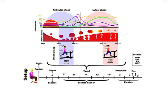Pesquisa da EACH-USP revela que as fases do ciclo menstrual alteram as respostas psicofisiológicas em mulheres saudáveis